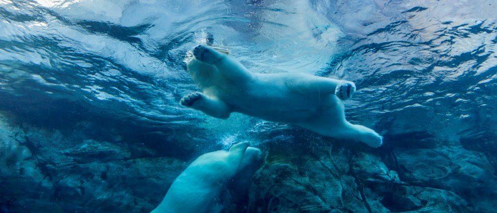 Direct Mail News 16/11/18: Case Study - Staying Cool Like a Polar Bear